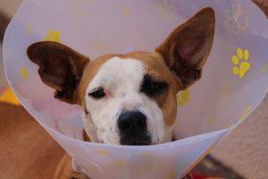 Des vétérinaires disponibles prêt de chez vous.