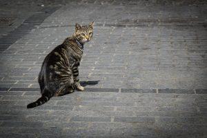 Contrôlez mieux votre chat grâce au collier gps chat